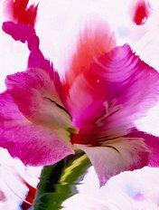 flower by Pluta
